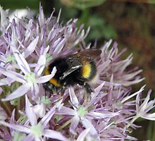 Bumble bee at Chelsea Flower Show by Danya
