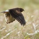 At Speed by David Friederich