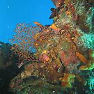 Vibrant Underwater Garden by lifevibrations