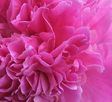 Pink Softness by Stephen Thomas