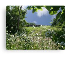 Prairie Wildflowers Canvas Print