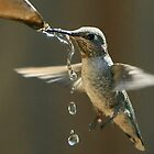 Hummer Drinking by NewDawnPhoto
