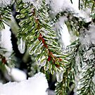 spruce under ice by LoreLeft27