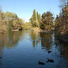 Botanic Gardens Adelaide by JimBob51