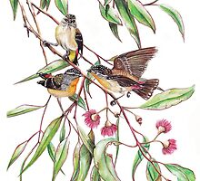 Spotted Pardalotes on Pink Flowering Gum by Meaghan Roberts