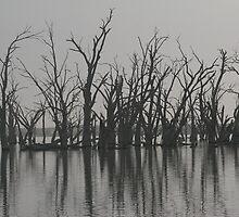 Wachtel Lagoon - Moorook by JimBob51
