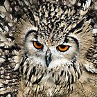 Angry Owl by celtes