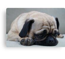It's a Pug's Life Canvas Print