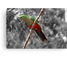 King Parrot in Dandenong Canvas Print
