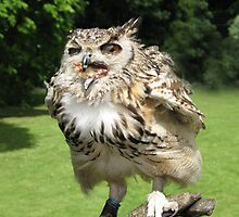 Owls Don't Need Table Manners! by jacqi