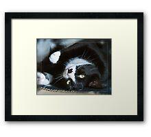Phoebe the cat Framed Print