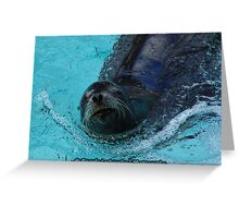 Seal Swimming at the Zoo Greeting Card