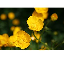 Buttercup Photographic Print