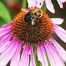 The Pollinator (not to be confused with the Terminator) by solareclips~Julie  Alexander