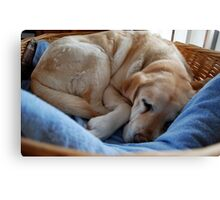 Fast Asleep Canvas Print