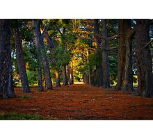 """""""A Walk in the Park"""" Photographic Print"""
