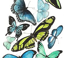 Butterflies by Meaghan Roberts