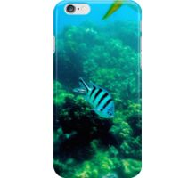 Commonly Seen Tropical Fish iPhone Case/Skin