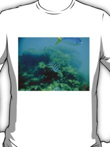 Commonly Seen Tropical Fish T-Shirt