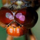 Red Eyes by Dennis Jones - CameraView