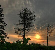Trees at Aspey Bay  by EvaMcDermott