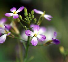 Radish Flower by velveteagle