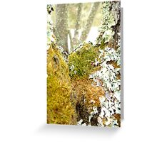 The Moss Greeting Card