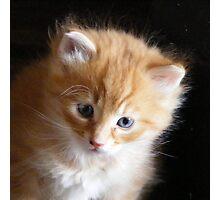 Ginger kitten Photographic Print