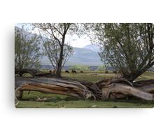 'Till the Cows Come Home Canvas Print