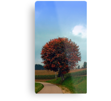 Blushing tree in shame | landscape photography Metal Print