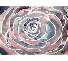 modern rose art Photographic Print