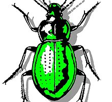 Green Beetle by theshirtshops