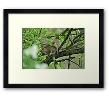 Squirrelly Stealth Framed Print