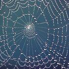 ~ Spider Webs ~ by Leeo