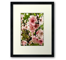 Bright pink peach blossoms of spring Framed Print