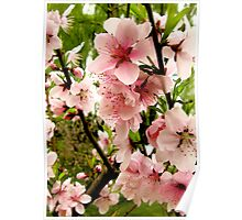 Bright pink peach blossoms of spring Poster