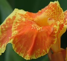 Citrus 2 by Sally Haldane