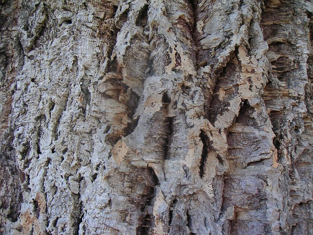 Cork Tree Bark by Ian McKenzie