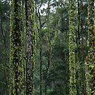 Moss covered Myrtle Beech by Marilyn Harris