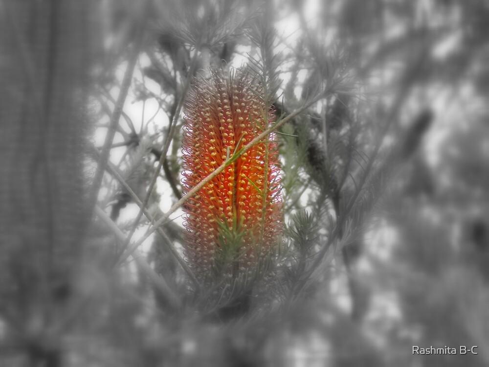 Flower by Rashmita B-C