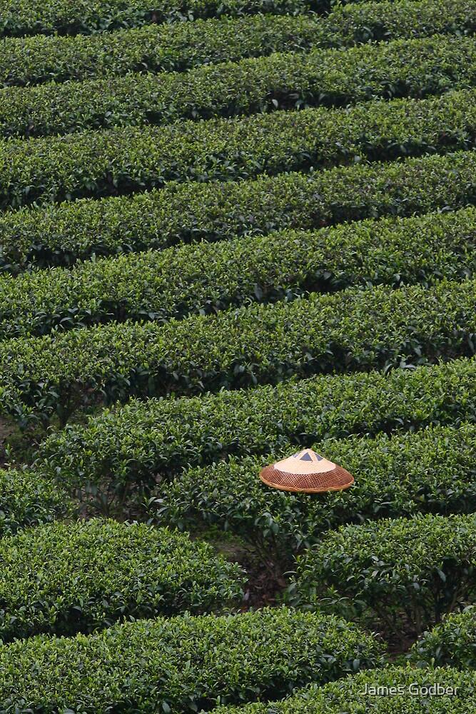 The Tea Picker's Hat by James Godber