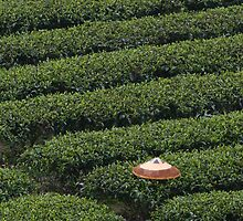 The Tea Picker's Hat by James Godber