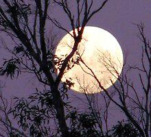 Moon in Gemini by Lynda Kerr