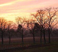 Winter over farmland by briandhay