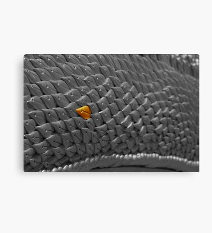 Dragon scale Canvas Print