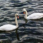 Swans at Hallstättersee by Charles Kosina