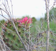 indian paint brush with cactus by conilouz