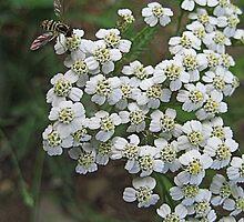 Little White Flowers by Angela M. Herrie