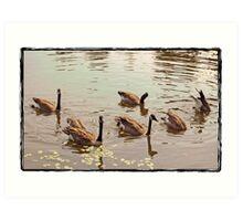 geese in lake Art Print