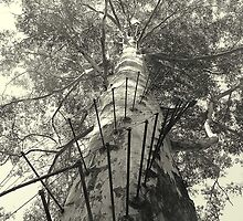 Gloucester Tree by Felicia Moore